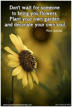 Plant your own love. Live Laugh Love
