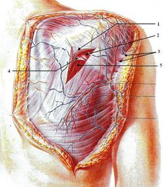 Fascia is a seamless web of connective tissue that covers, connects, and holds together the #muscles, organs, and skeletal structures in our body. It envelopes, penetrates and surrounds every structure, nerve, bone, #muscle and organ, affecting EVERYTHING you do. Our unique, proprietary knowledge of #fascia – one of the most important and understudied systems of the body - allows us to enrich overall #health and physical appearance with clients ranging from the near crippled and hopeless to…