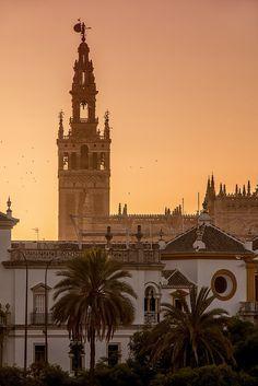 Una foto hermosa de La Giralda. Es una campanario en Sevilla. - Sara Ósk