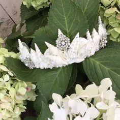 Mermaid Bridal Crown ~ MARIS