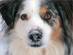 PET CARE- Winter Tips For Safe And Happy Pets
