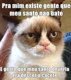 Grumpy cat quotes are funny to read. Tardar Sauce also known as the Grumpy cat is a celebrity and queen of cats. We have collected a list of amazingly funny and Gato Grumpy, Grumpy Cat Humor, Cat Memes, Grumpy Kitty, Grumpy Baby, Grumpy Cat School, Funny Memes, Grump Cat, Cats Humor