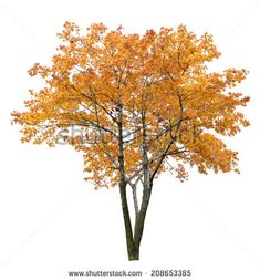isolated fall trees - Google Search Photoshop Images, Photoshop Design, Photoshop Elements, Architecture Graphics, Landscape Architecture, Landscape Design, Photomontage, Tree Psd, Trees Top View