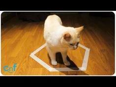 夥伴受困「結界」怎辦? 黑白貓用「嘴」輕鬆破解 | ETtoday寵物動物新聞 | ETtoday 新聞雲