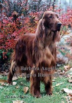Best of Breed Garden Flag IRISH SETTER full body dog by Barbara Augello