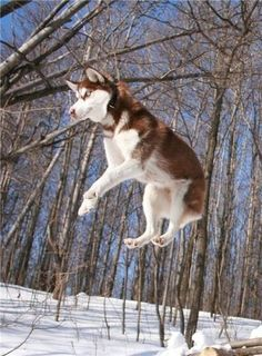 we all love husky dogs 640 36