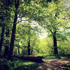 Frühlingstrip #lützschena #park #leipzig