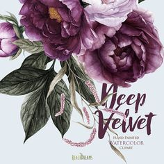 Peonies Flowers Watercolor Floral elements Burgundy Violet
