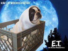 E.T. Halloween Costume of Echo the Show Boston Terrier Dog.  http://www.bterrier.com/halloween-costumes-of-echo-the-boston-terrier/  Like Boston Terrier Dogs on Facebook : http://www.facebook.com/bterrierdogs