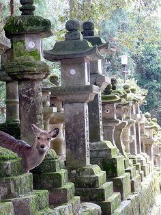 Kasuga Grand Shrine (春日大社), Nara by twiga_swala, via Flickr