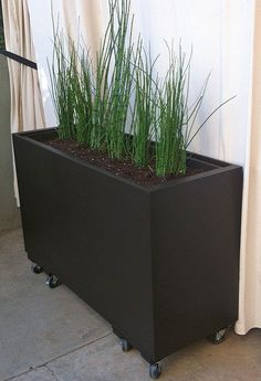 DIY old lateral filing cabinet on rollers .... great to 'contain' horsetail grass or bamboo in your house ... anywhere!! thrift store garden projects 14