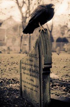 gravestone & crow. Cool, creepy picture.