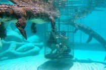 Croc Cage Diving at Cango Wildlife Ranch in South Africa. They also have lots of other wild animals encounters Adventure Bucket List, Adventure Travel, Visit South Africa, Blog Pictures, Paragliding, Africa Travel, Ranch, Wildlife, Animales