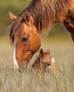 I love animals. Especially horses and puppies. So, except for 1 momentary lapse in judgement, animals are what you will see here. Baby Horses, Horses And Dogs, Wild Horses, Animals And Pets, Baby Animals, Cute Animals, All The Pretty Horses, Beautiful Horses, Animals Beautiful