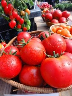Tomato Gardening - Controlling And Preventing Pests