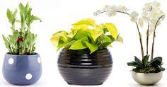 19 Plantas que Atraem a Energia Positiva na sua Casa
