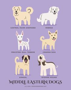 An Adorable Guide To The Dogs Of The World By Geographic Origin By Artist Lili Chin