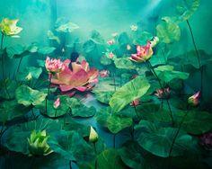 JeeYoung Lee es la artista que fotografía una pequeña habitación convertida en un mundo fantástico surrealista.  Tras semanas de escenificación Lee se sitúa en medio de estos mundos imaginarios. Ninguna de estas fotografías han pasado por Photoshop.