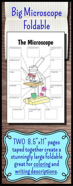 "This Giant Foldable (2 pieces of 8.5""x11"" paper taped together) provides students with a large enough area to write down all the functions of the parts of the microscope in one place. Students LOVE the large size and it creates a great review sheet as well as coloring activity. Perfect for interactive notebooks or it can be hole punched and put into a binder."