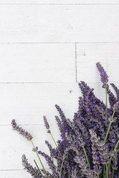 anetteshus-late summer-02484 - #02484 #anetteshus #summer - Flower Backgrounds, Phone Backgrounds, Wallpaper Backgrounds, Iphone Wallpaper, Plant Wallpaper, Flower Wallpaper, Screen Wallpaper, Lavender Aesthetic, Flower Aesthetic