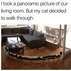 Panoramic cat photo goes viral. Enjoy RUSHWORLD boards, LULU'S FUNHOUSE, UNPREDICTABLE WOMEN HAUTE COUTURE and EYE CANDY ARCHITECTURAL MASTERPIECES. Follow RUSHWORLD! We're on the hunt for everything you'll love!