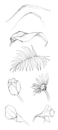 cyclicillusions:  some contour drawings from my drawing botanicals class sketchbook