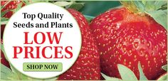 Henry Field's Seed and Nursery Company Garden Seeds, Garden Plants, Garden Catalogs, Plant Nursery, Fruit Trees, Shrubs, Fields, Strawberry, Vegetables