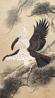 Great Hawk pine tree / Japanese Hanging Scroll / by Nemoral