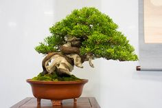 Shohin bonsai at the 4th US National Bonsai Exhibition | Bonsai ...
