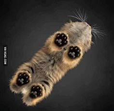 Kitten toes!