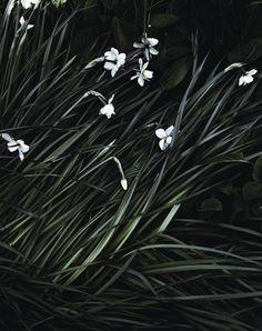 flowers in the wind (vía Suvi sur le vif - Blogi | Lily.fi)