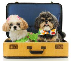 www.PamperedPetsTravel.com  #dog #dogs #puppy #puppies #pet #pets #travel #trip #traveling #PetTravel #cute #ShihTzu