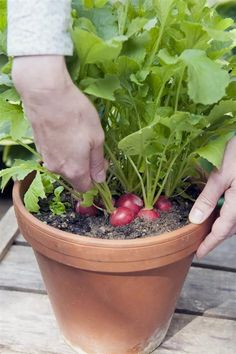 Garden Drawing Balcony Container Vegetable Gardening Guide - Unique Balcony & Garden Decoration and Easy DIY Ideas Growing Vegetables In Containers, Types Of Vegetables, Container Gardening Vegetables, Container Plants, Vegetable Gardening, Growing Veggies, Succulent Containers, Container Flowers, Gardening For Beginners