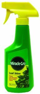 Miracle-Gro 100540 Leaf Shine Ready-to-Use Spray, 12-Ounce by Miracle-Gro. $6.83. Won't clog leaf pores and is odor-free. Apply when plant leaves appear spotty or dull. *. Cleans and beautifies all hard-leafed foliage plants. For all your house plant needs, Miracle-Gro's Plant Food meets the unique needs of all indoor plants and promotes beautiful results for all flowering and foliage houseplants.. Save 51%!