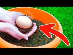 Entierra un huevo en tu jardín y verás lo que sucede unos días después - YouTube