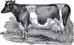 Image result for Free Printable Vintage Farm Art