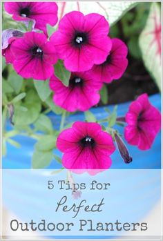 5 tips for perfect planters! Love the tips on how to save money on potting soil and building beautiful plant combinations! #gardening via www.makinglemonadeblog.com