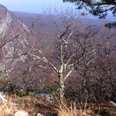 Nothing like a good 4.5 mi hike @ DWG