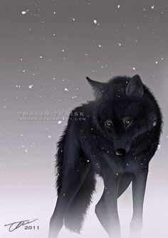Wolves | Dark Side by cerona