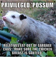 Possum Know Your Meme