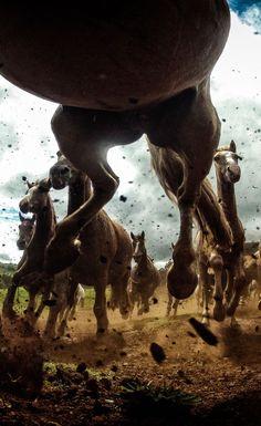 Running horses. ❀ nixele ❀: Photo
