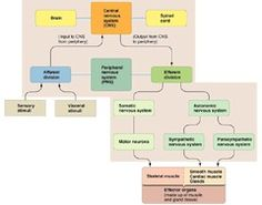 protein synthesis flow chart answer key - Google Search ...