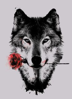Wolf with rose