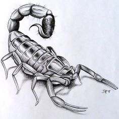I dreamed about a very detailed Dark-red or copper-ish scorpion in someone's hand. A few days after I warned my family to look out for scorpions, I got a picture of the same one from our bathroom texted to me by my dad. 3d Tattoos, Unique Tattoos, Tattoo Drawings, Sleeve Tattoos, Cool Tattoos, Art Drawings, Owl Tattoo Design, Angel Tattoo Designs, Fallen Angel Tattoo