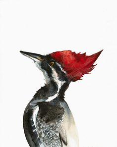 Pileated Woodpecker watercolor paintingArchival by amberalexander, $20.00