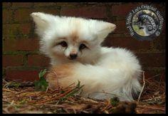 Woodsplitterlee Handmade Poseable Baby Vanilla Fox