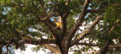 Amazon Tree Climbing - Manaus