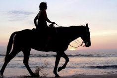 Beachfront Horseback Riding - W Retreat & Spa - Vieques Island, Puerto Rico  http://www.wvieques.com....  #Vieques #PuertoRico