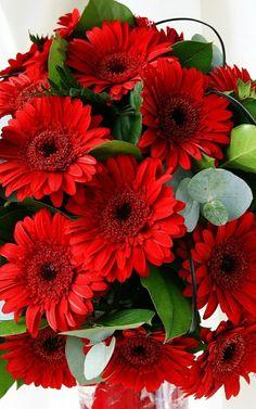 Very Beautiful Flowers, Exotic Flowers, Amazing Flowers, My Flower, Pretty Flowers, Red Flowers, Beautiful Gardens, Flower Pots, Easter Wallpaper