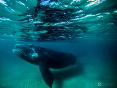 Photographer Stumbles Upon Whale's Underwater Adventure